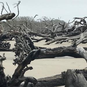 driftwoodlarge