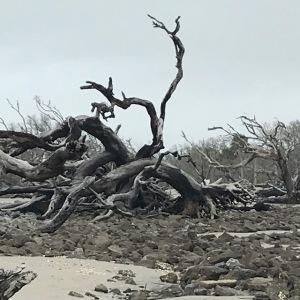 driftwoodlarge2