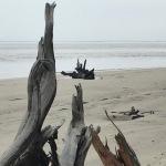 driftwoodsmall2